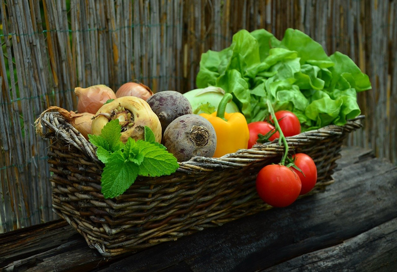 alimentation saine pour seniors